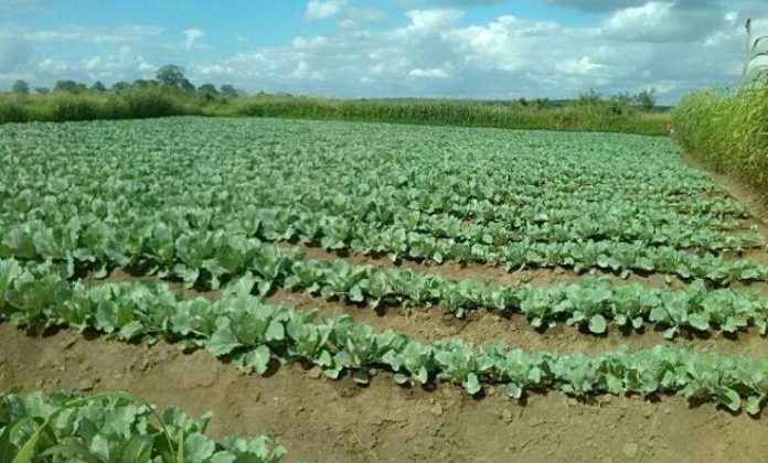 Farmers offered training aimed at reducing food insecurity