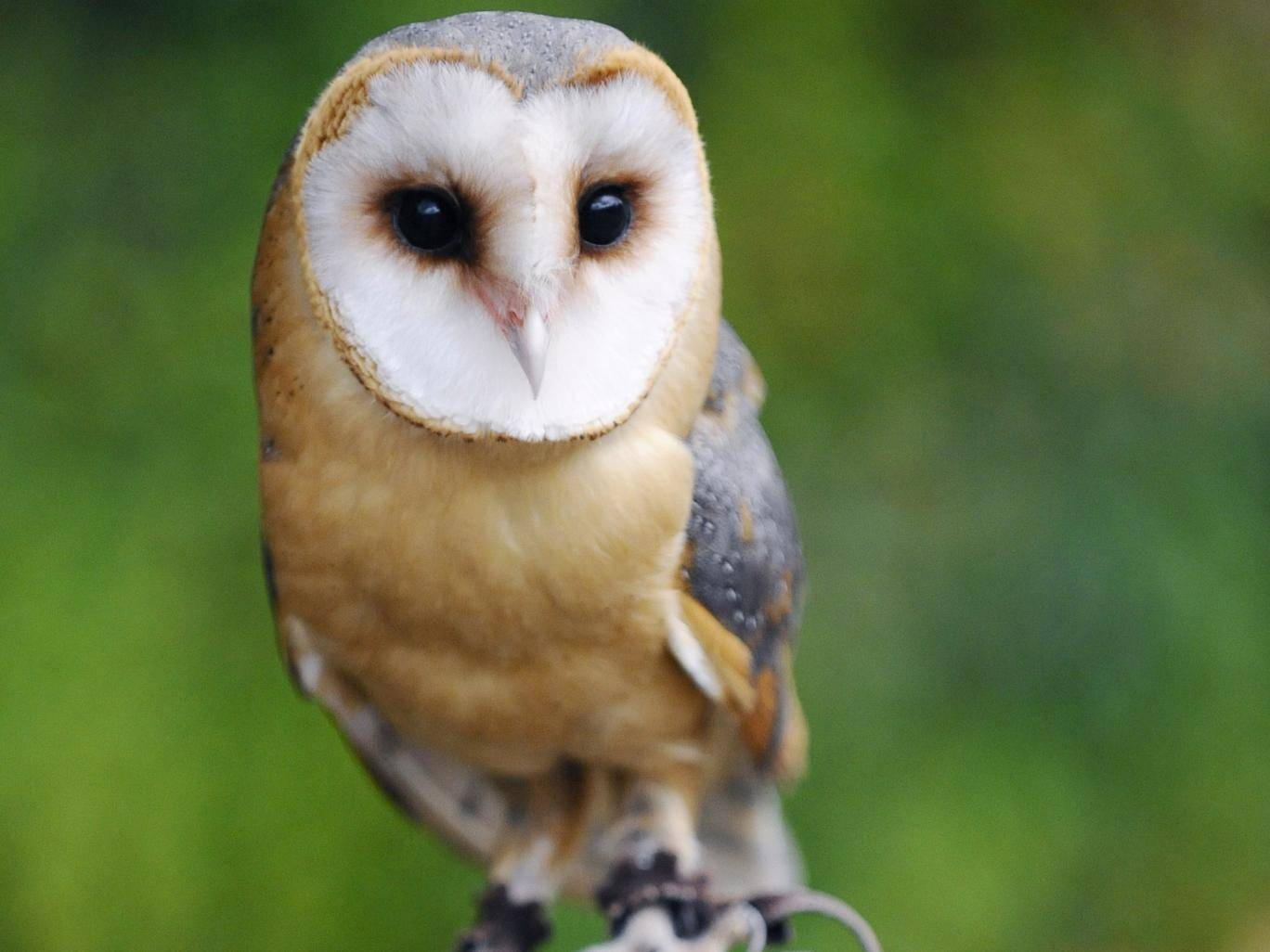 Man admits keeping owl heads in jam jars so he could sell them to pagans https://t.co/yeAx8B6cil https://t.co/dgPYqDprJx