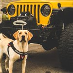 RT : All pets make great co-pilots. #LoveYour...