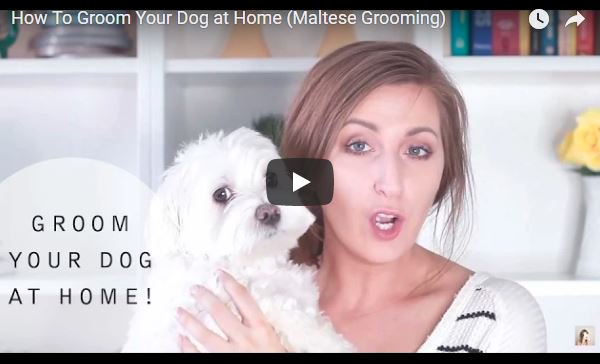 Want To Learn How To Groom Your Dog at Home    https://t.co/jI7Ts2I5H7   @Technology_Pets https://t.co/F3Ei8Fkq62