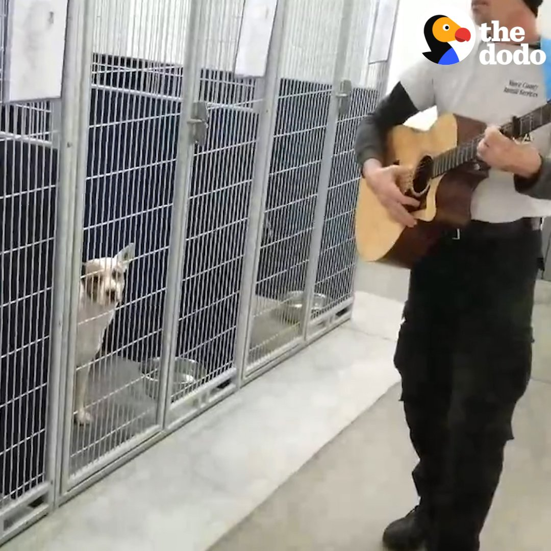 RT @dodo: This guy's singing to shelter dogs to help them feel less lonely ???? https://t.co/lbru5CSN02