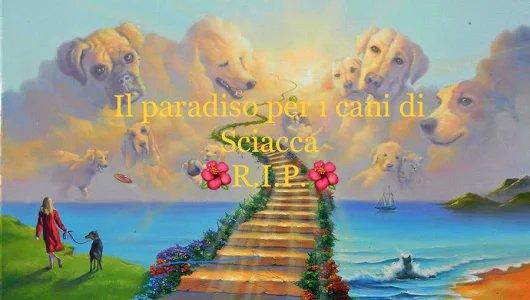 #Sciacca