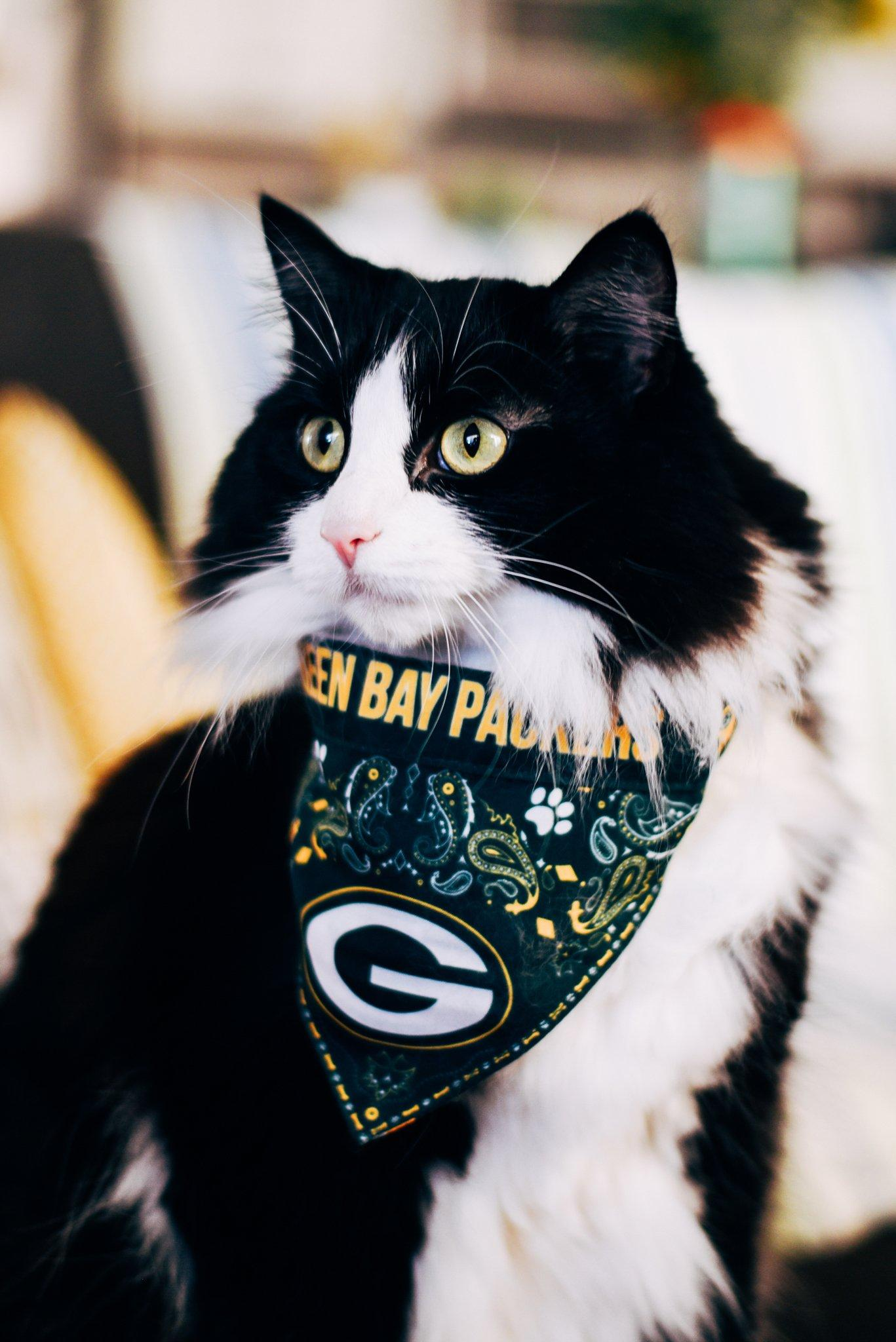 We love our #PackersPets! Thanks for sharing your photos, fans.   #LoveYourPetDay ��: https://t.co/tuHDY08mDA https://t.co/Zyzq1vzYyf