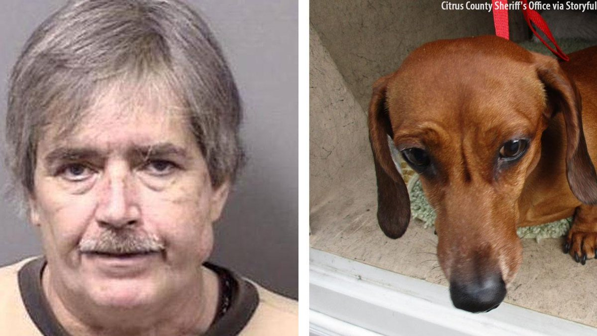 Florida man arrested after using coat hanger-like tool to remove bones from dog's stomach - https://t.co/3kqpISpAeV https://t.co/pFhjL8nDTL