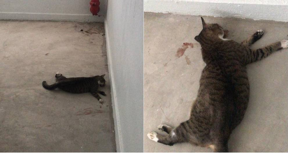 Dead cat, possibly abused, found at Block 147 Yishun