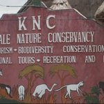 Two lions, spotted hyena relocated to Kitale Nature Conservancy