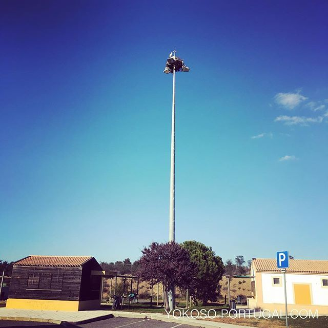 test ツイッターメディア - ポルトガルのコウノトリは、電柱などのてっぺんに巣を作っています。 #ポルトガル https://t.co/O4NaCMHfig
