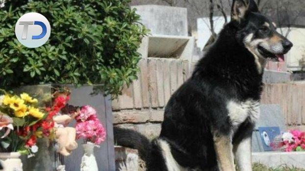 FIEL HASTA EL FINAL...  #Viral 😢❤ Fallece perro que veló la tumba de su dueño por 11 años  📷➡ https://t.co/QaRcFizNf7 https://t.co/E1h5ieBsFy