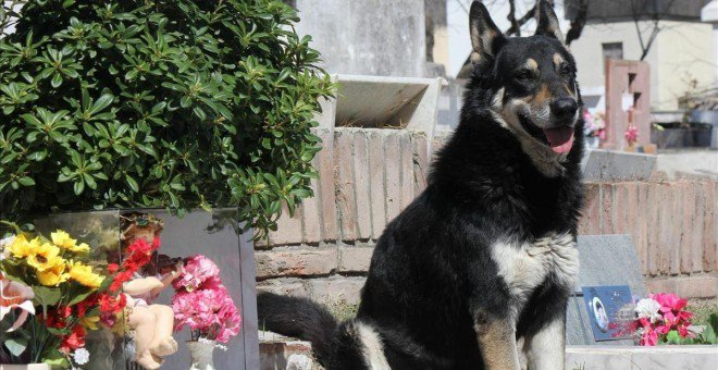 Muere 'Capitán'  el perro que  muere 'capitán'