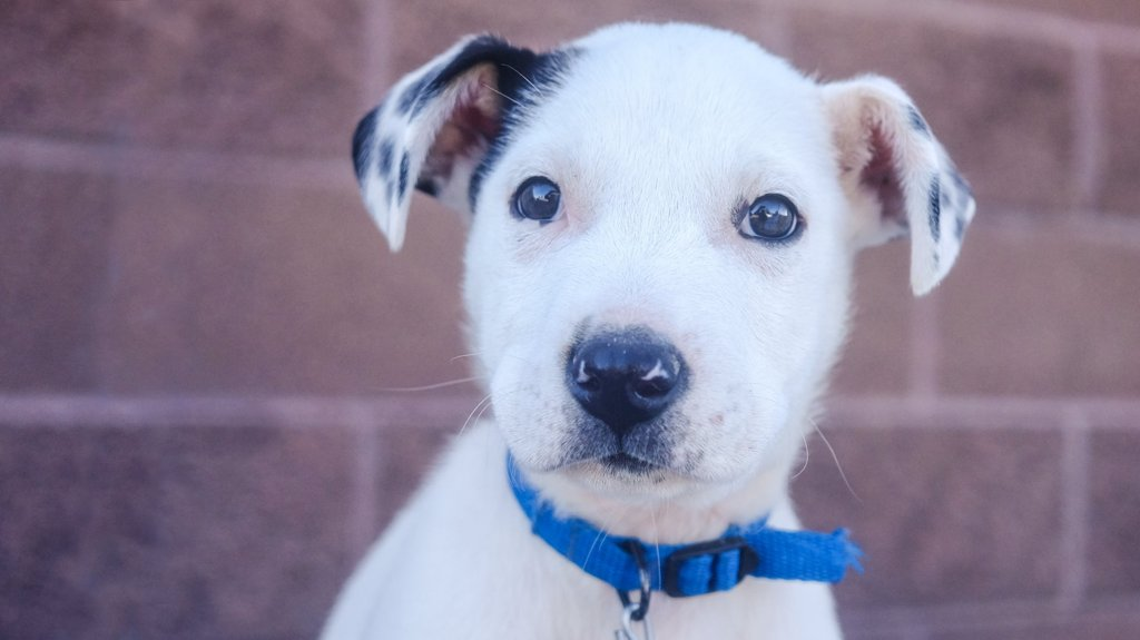 and Denver Dumb Friends League to host Have a Heart for Homeless Pets telethon