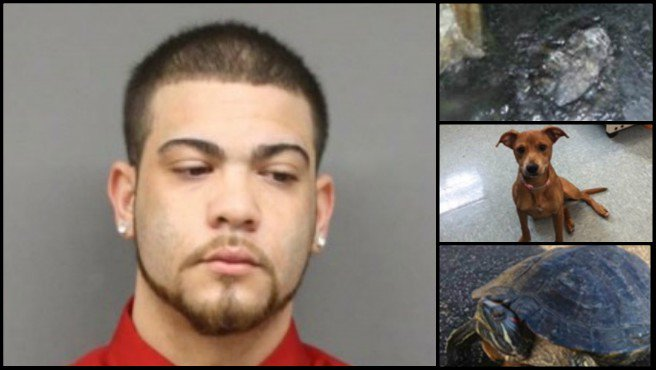 Man wanted for abandoning dog, turtle turns himself in
