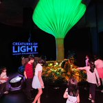 'Creatures of Light' exhibit coming to Denver Museum of Nature and Science