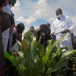 EU gives Icipe grant to help farmers fight armyworm