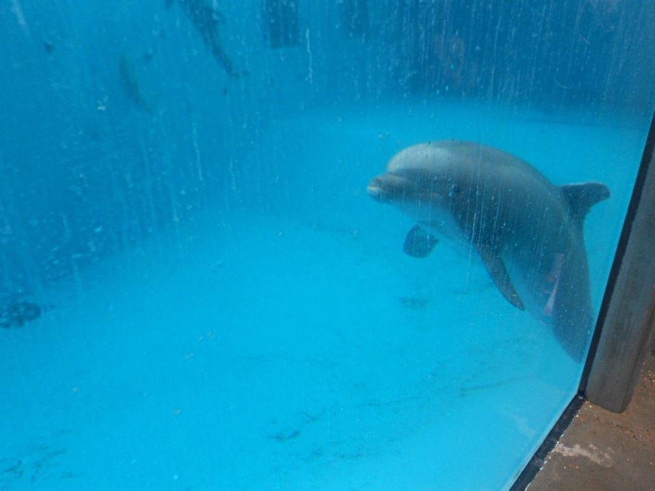 Flashback 2016 – One Dolphin's Story: Beachie https://t.co/o6kYJ5Ie0a #DolphinProject #DontBuyATicket https://t.co/Pmpi9niiUw