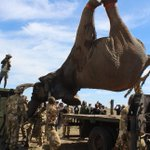 State moving 21 jumbos to Tsavo Park for Sh4.5m