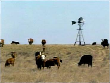 Drought Forces Painful Choices For Some WesternRanchers