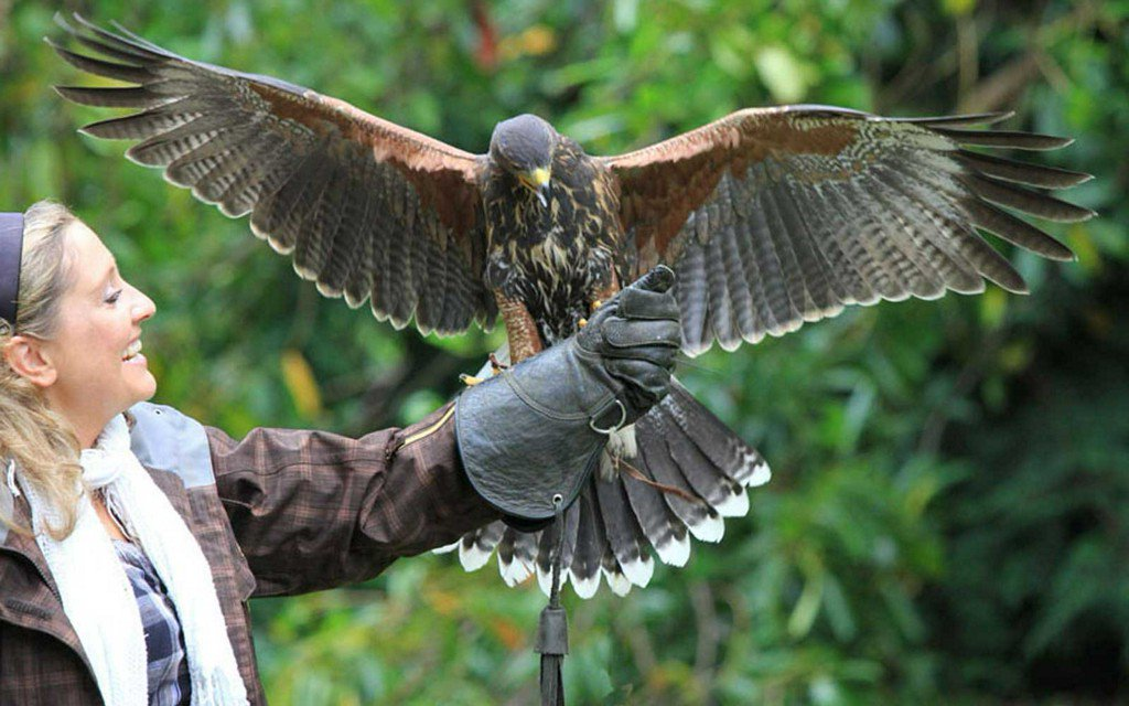 You Can Learn to Fly a Hawk at Ireland's Ashford Castle
