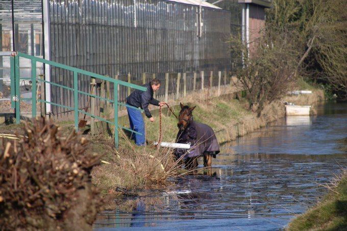 Dier te water Raaphorstlaan Monster betrof paard die op zoek was naar vers gras. Staat intussen weer in de wei https://t.co/qfDIAL3RuJ