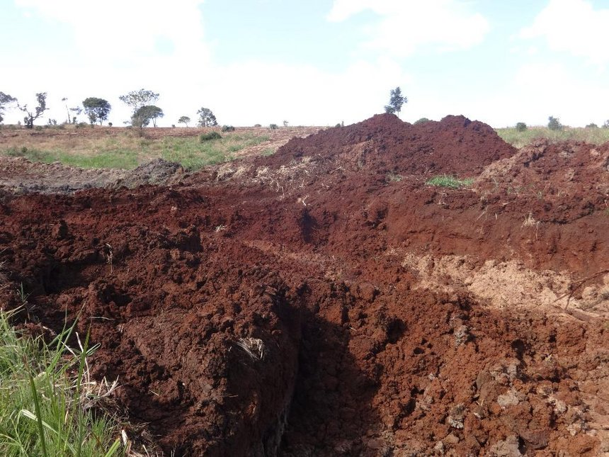 Kiambu Forest on verge of extinction as developer builds illegal access road