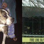 Williamston couple says dog alerted them to early-morning house - | WBTV Charlotte