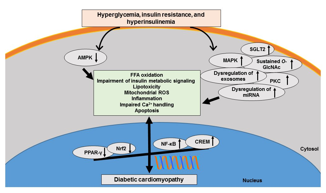 test Twitter Media - REVIEW:  Diabetic Cardiomyopathy - An Update of Mechanisms Contributing to This Clinical Entity  https://t.co/tB9RazKZhT   #cardiomyopahty #diabetes #cardiology #HeartResearch #CardiovascularResearch https://t.co/caJJeytkek