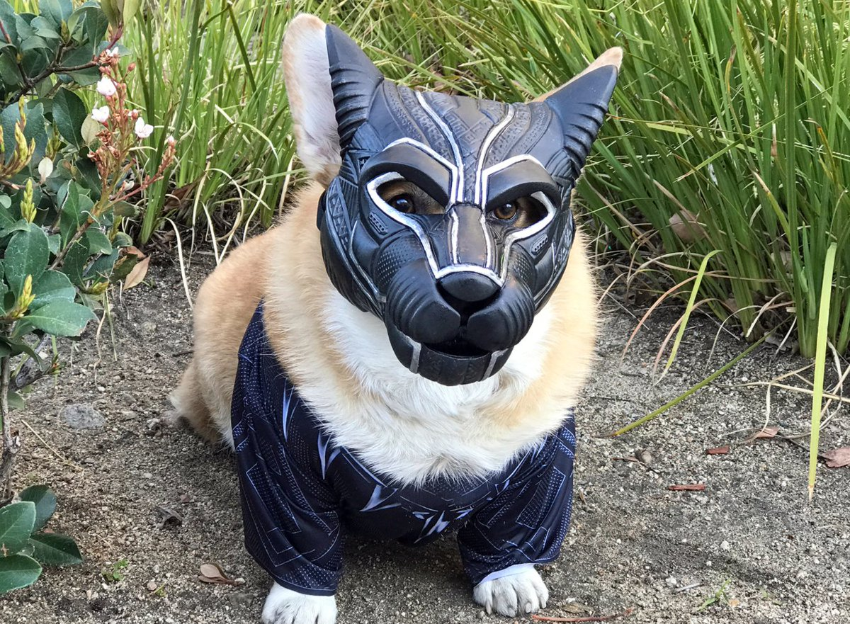 getting this racist corgi fired for appropriation. https://t.co/sZ6BvMJGE4