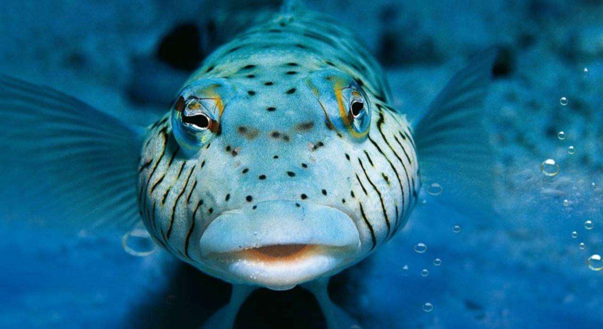 That`s just <b>Super</b>b!  #carpfishing #lure #sportfishing https://t.co/eMZELflfog