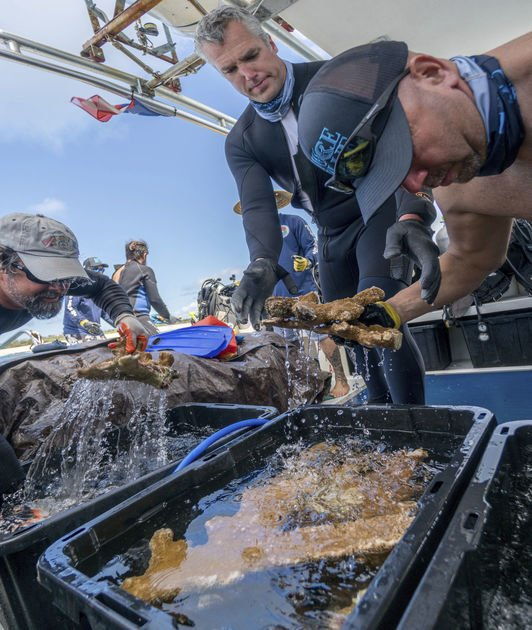 Crew with seeds, corals restore environment in Puerto Rico