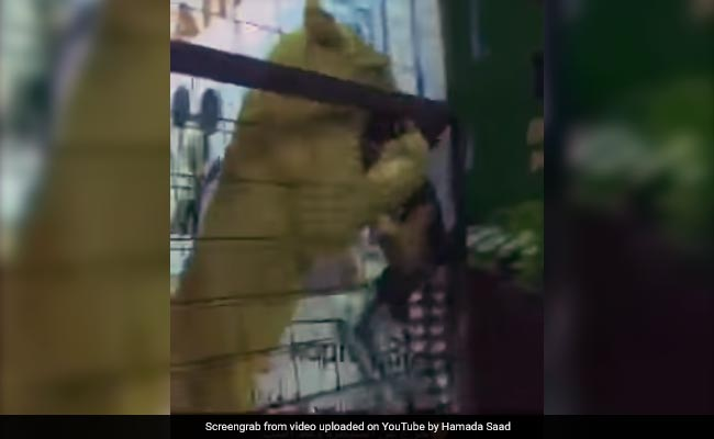 Children Were Allowed Into A Lion's Cage. Then, A Girl Was Attacked