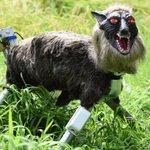 Meet your new nightmare, the robotic 'Super Monster Wolf'