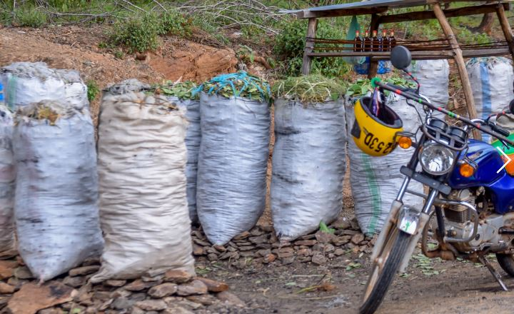 Roundup: Kenya grapples with low timber, charcoal supply as gov't saves forests