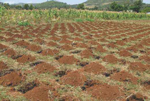 To survive climate shocks, farmers must embrace conservation farming