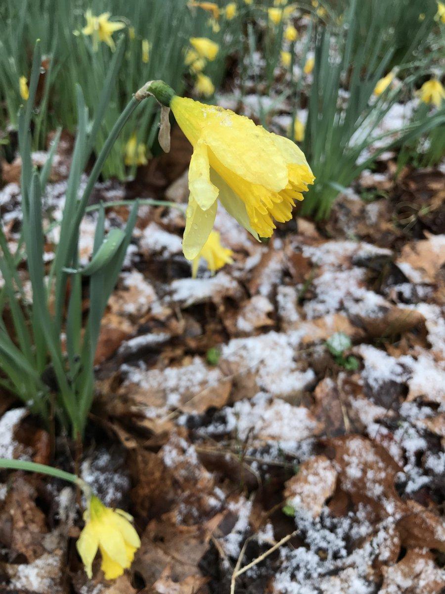 test Twitter Media - #Spring is around the corner!  Have a great spring break. https://t.co/jdoXuMz3Bz