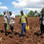 State to contract 10,000 farmers to grow maize