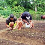 Soil fertility knowledge can boost your harvests
