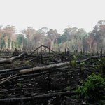 Environment CS urged to curb dwindling forest cover