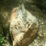 Baringo cops looking for illegal loggers, wood dealers