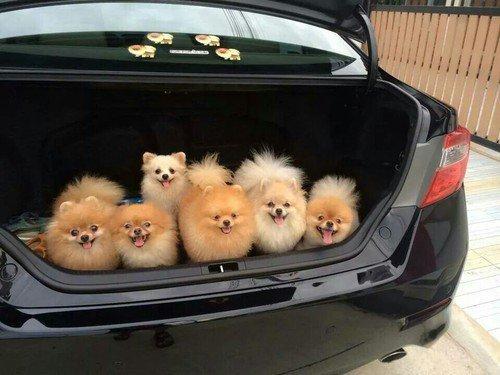RT @MrFilmkritik: Officer: pop the trunk  Me: I can explain https://t.co/xDW2O7FqGa