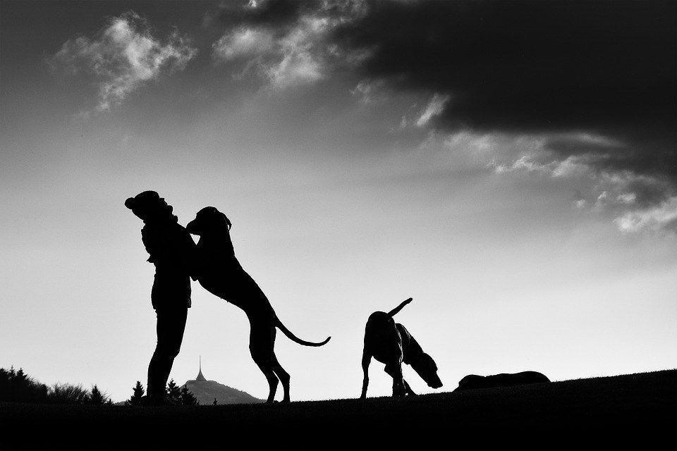 Puppy love predates recorded history, study shows - | WBTV Charlotte