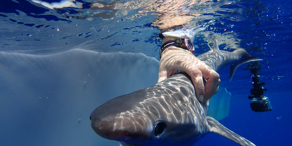 New shark species discovered in depths of the Atlantic