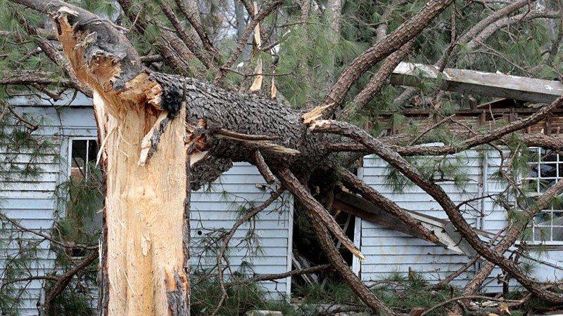 Virginia boy sleeping on top bunk killed when tree crashes into home