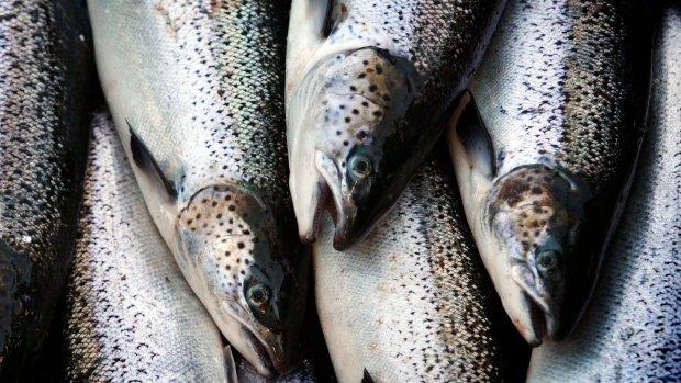 How Washington's net-pen fish farm ban affects Canada