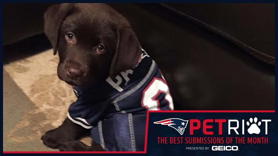 #Patriots pups & more of February's best #PatriotsPETriot of the Month submissions: https://t.co/59sxHA4vse https://t.co/EDqLJamlLv