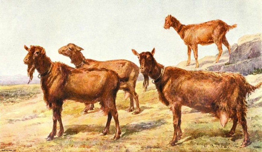 Today is quintidi 15 Ventôse in the year of the Republic CCXXVI, celebrating the goat. https://t.co/aZPKnFyyVs