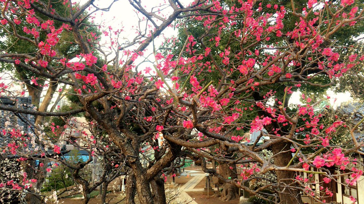 1 pic. フラッと立ち寄った神社のお花が綺麗だった。 XMjxQjDMyV
