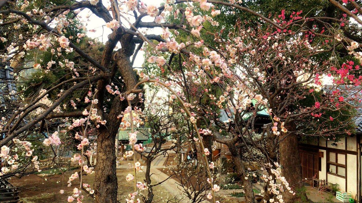 2 pic. フラッと立ち寄った神社のお花が綺麗だった。 XMjxQjDMyV