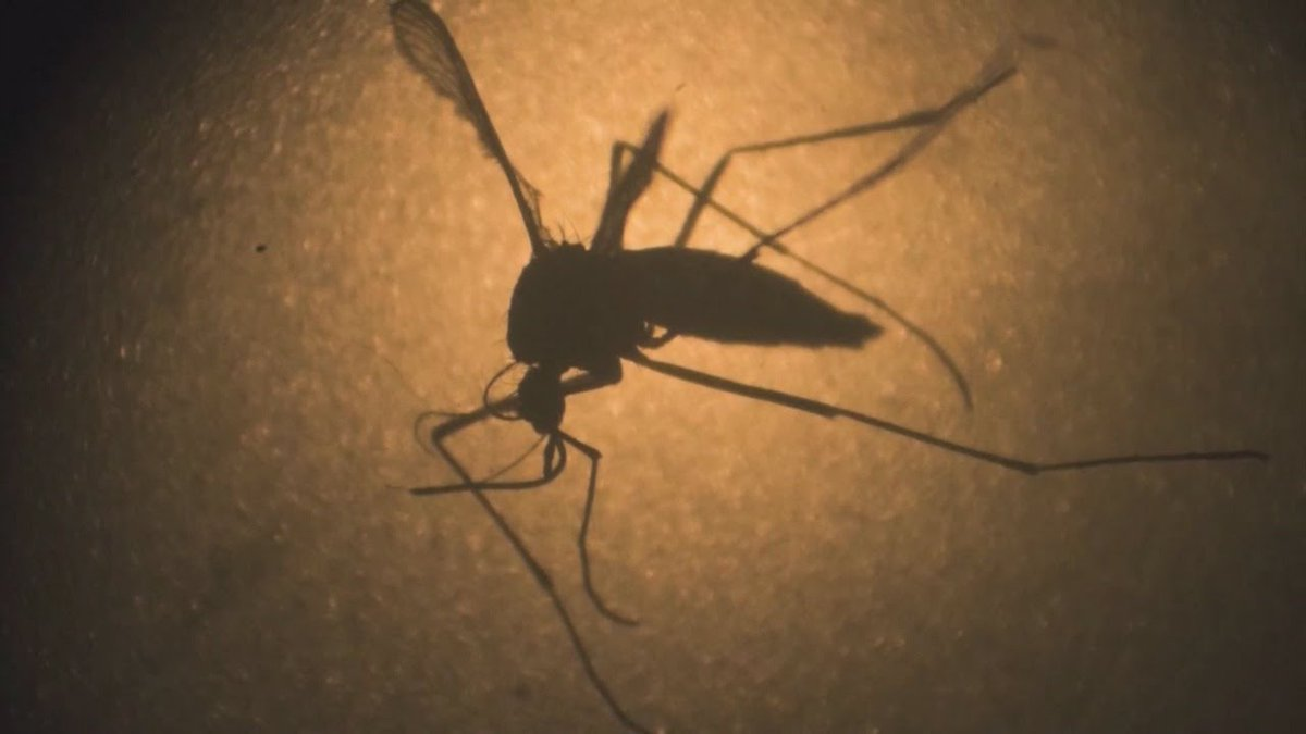 Is The Zika Virus Still A Concern For Travelers?