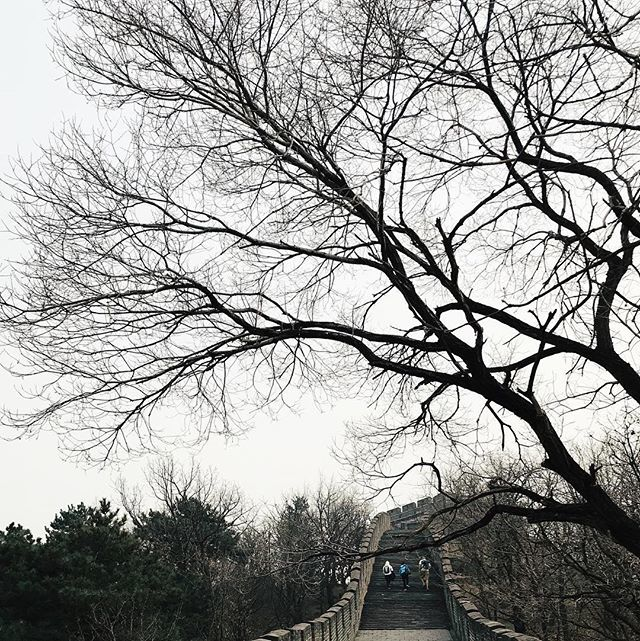 RT @0xffan: 生命的张力 ————————— #china #beijing #thegreatwall #greatwall #mutianyu #vsco https://t.co/m7idDdIDMa...