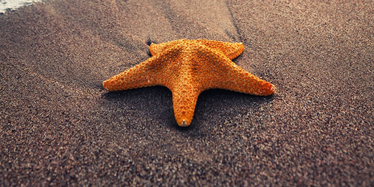 Thousands of starfish wash ashore in England after winter weather