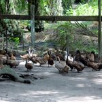China reports highly pathogenic H5N6, H7N9 bird flu outbreaks - OIE